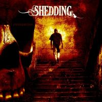 Shedding - Introspection