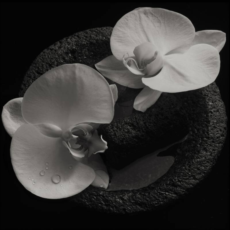 chronique Mike Patton - Corpse Flower (feat Jean-Claude Vannier)