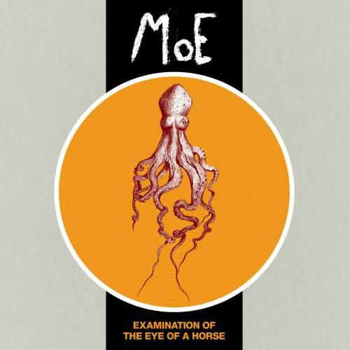 chronique Moe - Examination Of The Eye Of A Horse