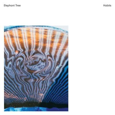 Elephant Tree - Habits