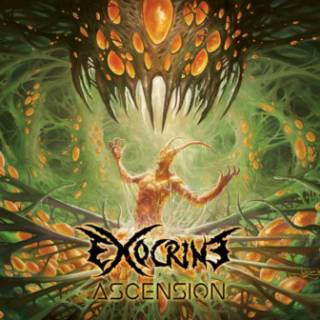 Exocrine - Ascension (chronique)