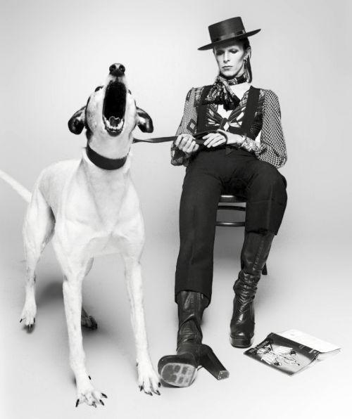 David Bowie (groupe du mois)