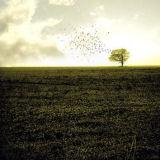 Escarres + Greenwald - Sturm und drang act I (split-cd)