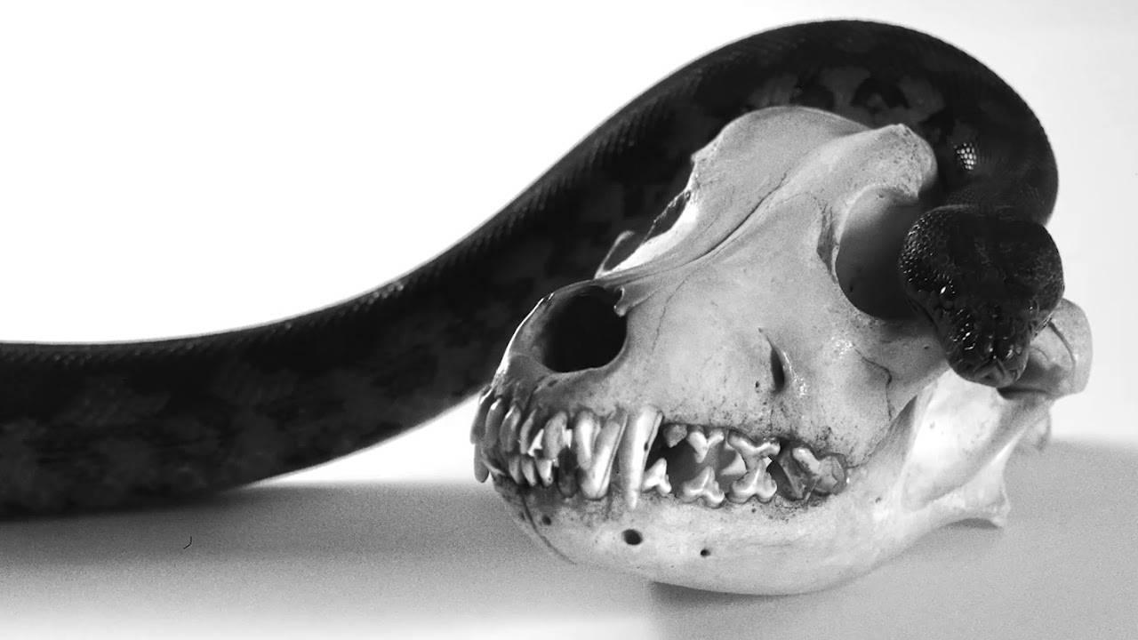 Sürya n'a pas peur des serpents (actualité)
