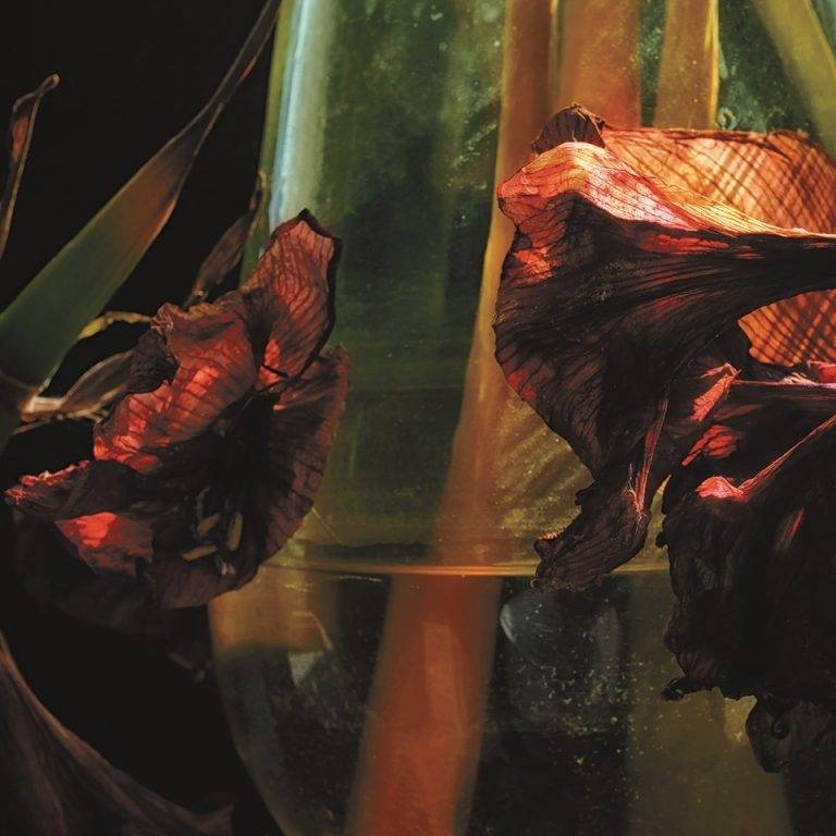 Hayvanlar Alemi en pleines turbulences -  Psychedelia in Times of Turbulence