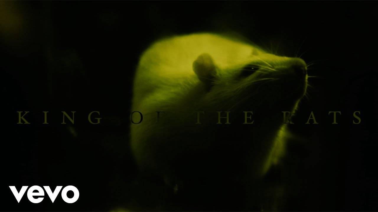 Bodysnatcher couronné - King of the Rats (actualité)